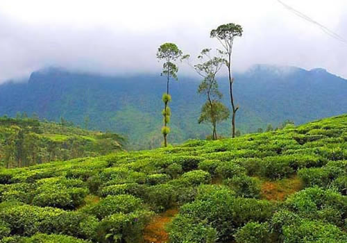 Badulla Sri Lanka  City new picture : ... the eastern slopes of central hills of Sri Lanka. There are