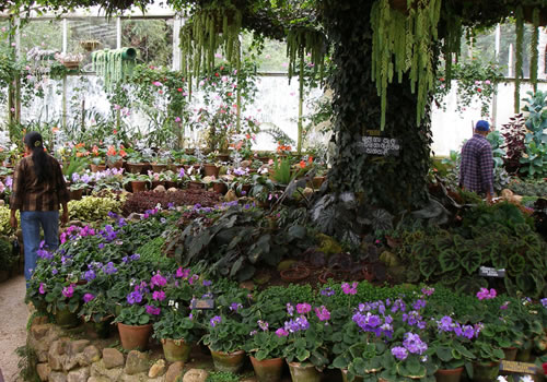 Hakgala botanical gardens sri lanka for Home garden design in sri lanka