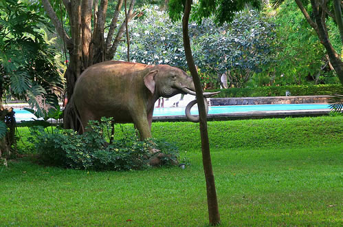 Hotels in the Cultural Triangle : Sigiriya, Dambulla, Polonnaruwa ...